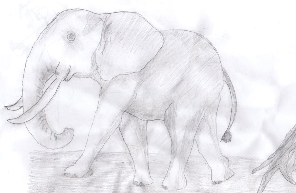 First drawing of an elephant