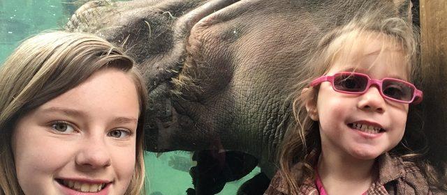 Fun at the St. Louis Zoo
