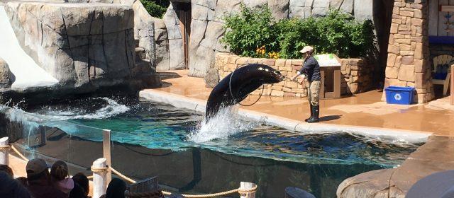 Sea Lion Show- St Louis Zoo (Part 2)