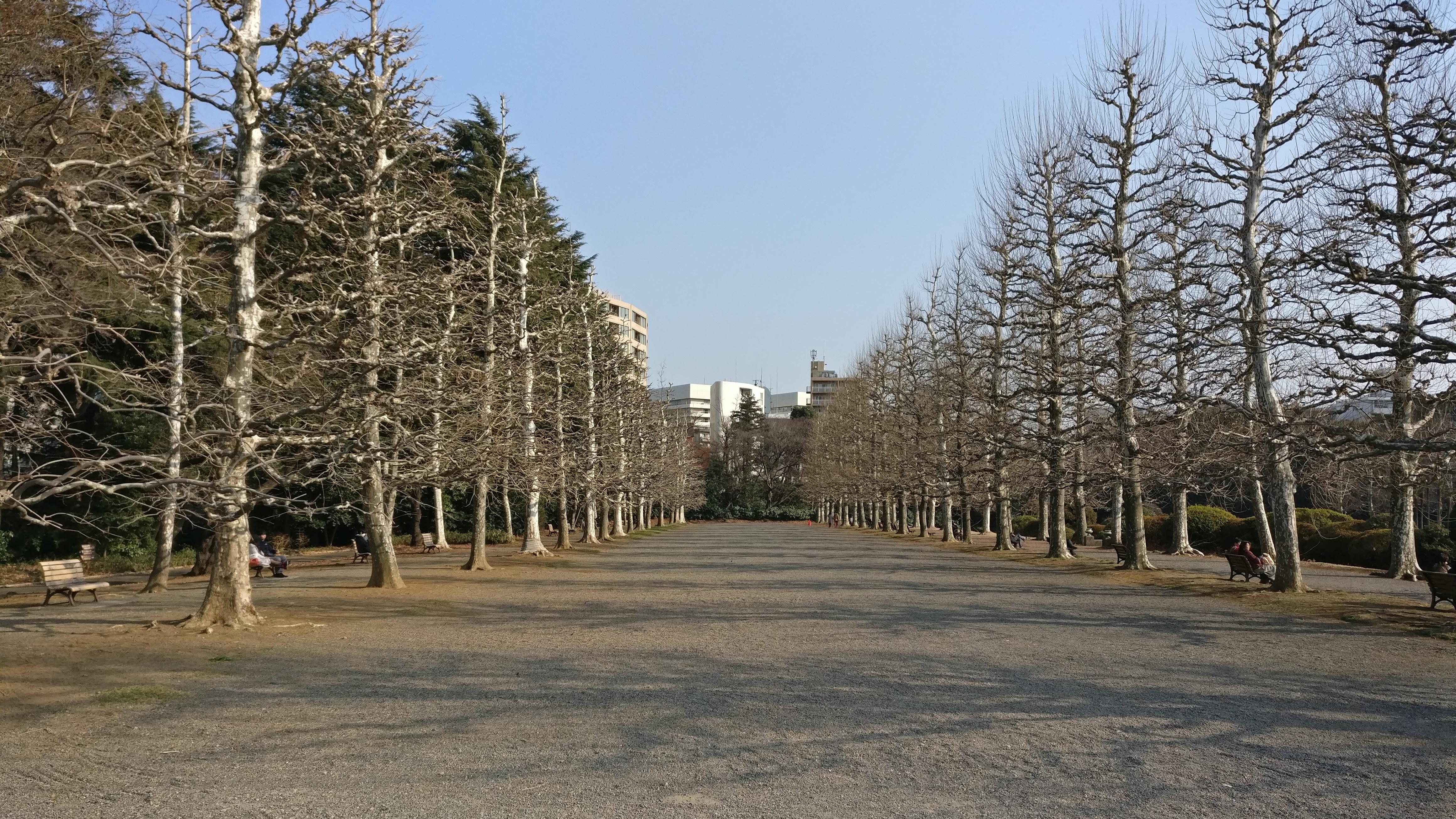 Tokyo Day 24 – Shinjuku Gyoen National Garden   Raising 7 Kids